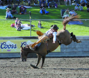 images.raceentry.com/infopages1/truckee-professional-rodeo-infopages1-12492.png