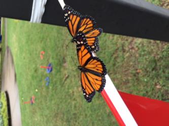 images.raceentry.com/infopages2/butterfly-swamp-fun-run-5k-infopages2-4688.png