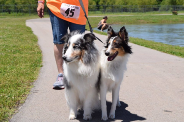 images.raceentry.com/infopages2/doggie-dash-and-canine-carnival-infopages2-53658.png