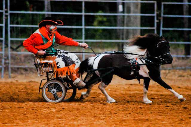 images.raceentry.com/infopages2/marion-rodeo-infopages2-12514.png