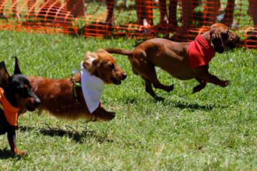 images.raceentry.com/infopages3/sunset-doxie-derby-infopages3-4499.png