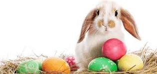 1st Annual Bunny 5K registration logo