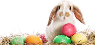 2016-1st-annual-bunny-5k-registration-page