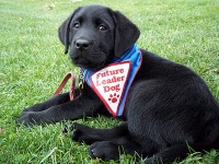 5k Walk/Run For Leader Dogs For The Blind registration logo
