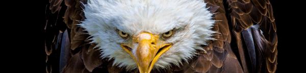 EPIC Eagle 5K registration logo