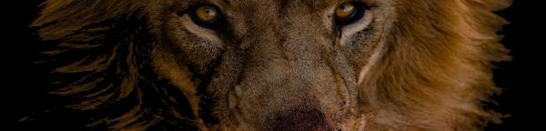 EPIC Lion 5k