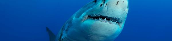 EPIC Shark 5K registration logo