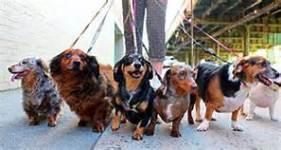 2017-family-friendly-pet-walkrun-registration-page