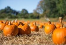 Jamestown Great Pumpkin Race registration logo