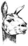 Lama Trot Race registration logo