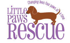 Little Paws Dachshund Dash Virtual 5K registration logo
