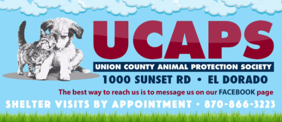 2021-race-for-the-rescues-registration-page