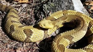 2020-rattlesnake-run-jim-thorpe-registration-page