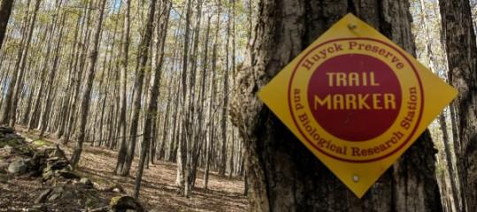 Rensselaerville Ramble Trail Run & Walk registration logo