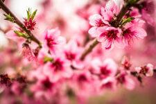 Run Thru the Blooms registration logo