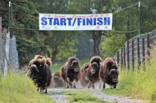 2019-running-with-the-bulls-palmer-registration-page