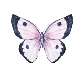 The Butterfly Children 5k Run/Walk registration logo