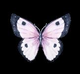 2017-the-butterfly-children-5k-runwalk-registration-page