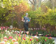 2019-tulip-festival-5k-registration-page