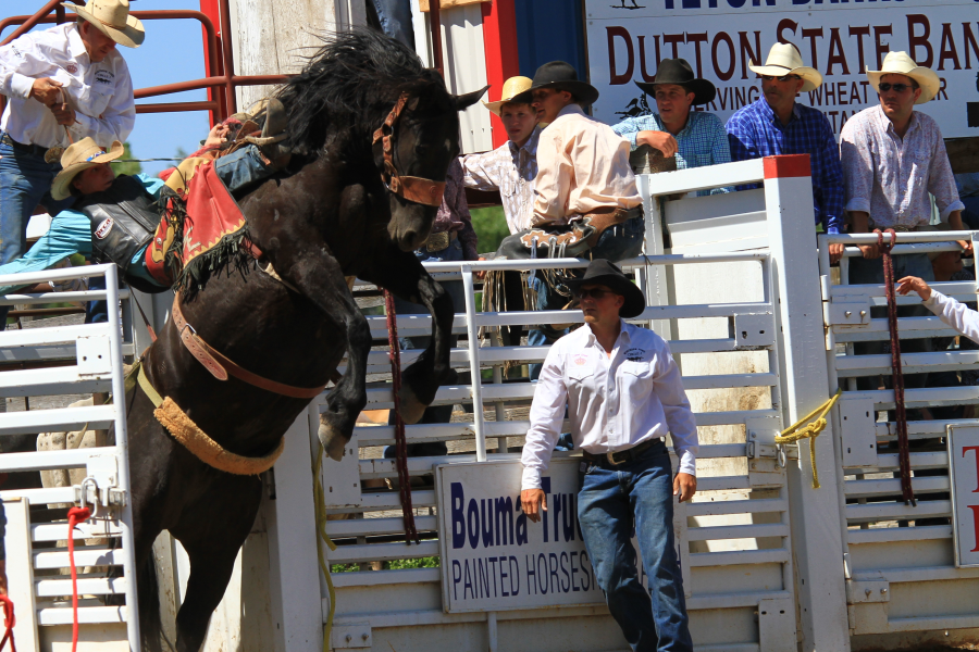 images.rodeoticket.com/infopages/choteau-american-legion-independence-day-rodeo-infopages-12581.png