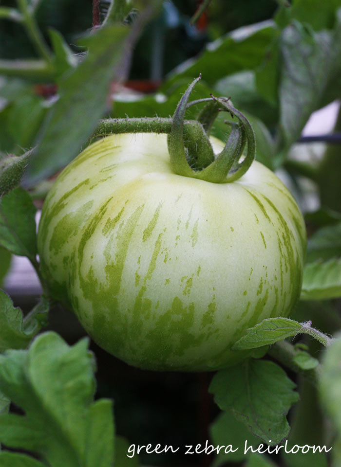A Midsummer's Garden - Why You Should Grow Your Own Vegetables & Herbs from Soupaddict.com