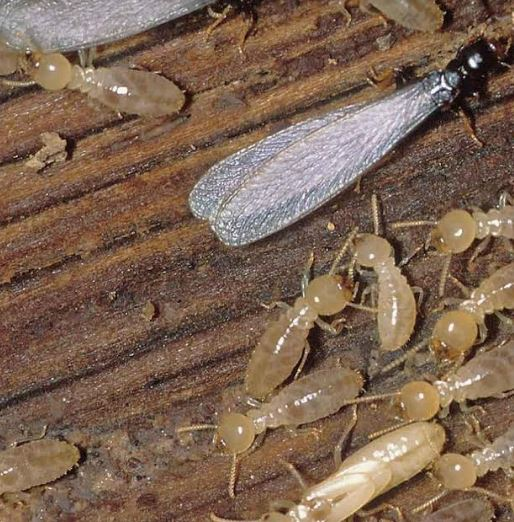 Image 5 | Beebe's Pest Termite & Bee Service