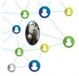 Spirit of Equus Consulting