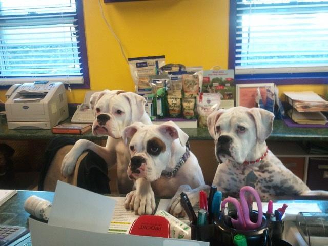 Image 3 | VitalPet - Veterinary Care Unlimited