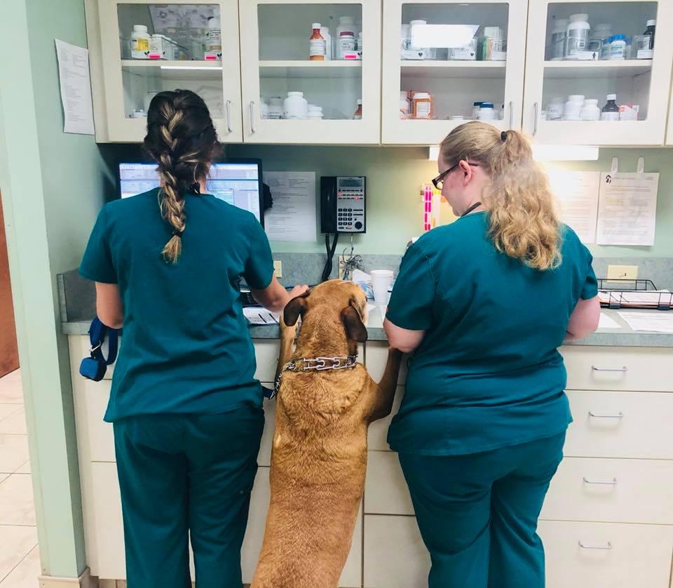 Image 2 | Michigan City Animal Hospital
