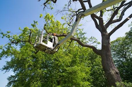 Tip Top Tree Service LLC