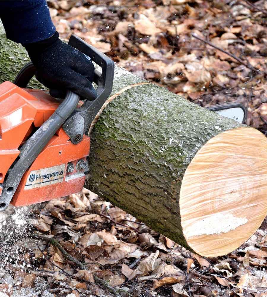Panorama Tree Care- Brandon Tree Services