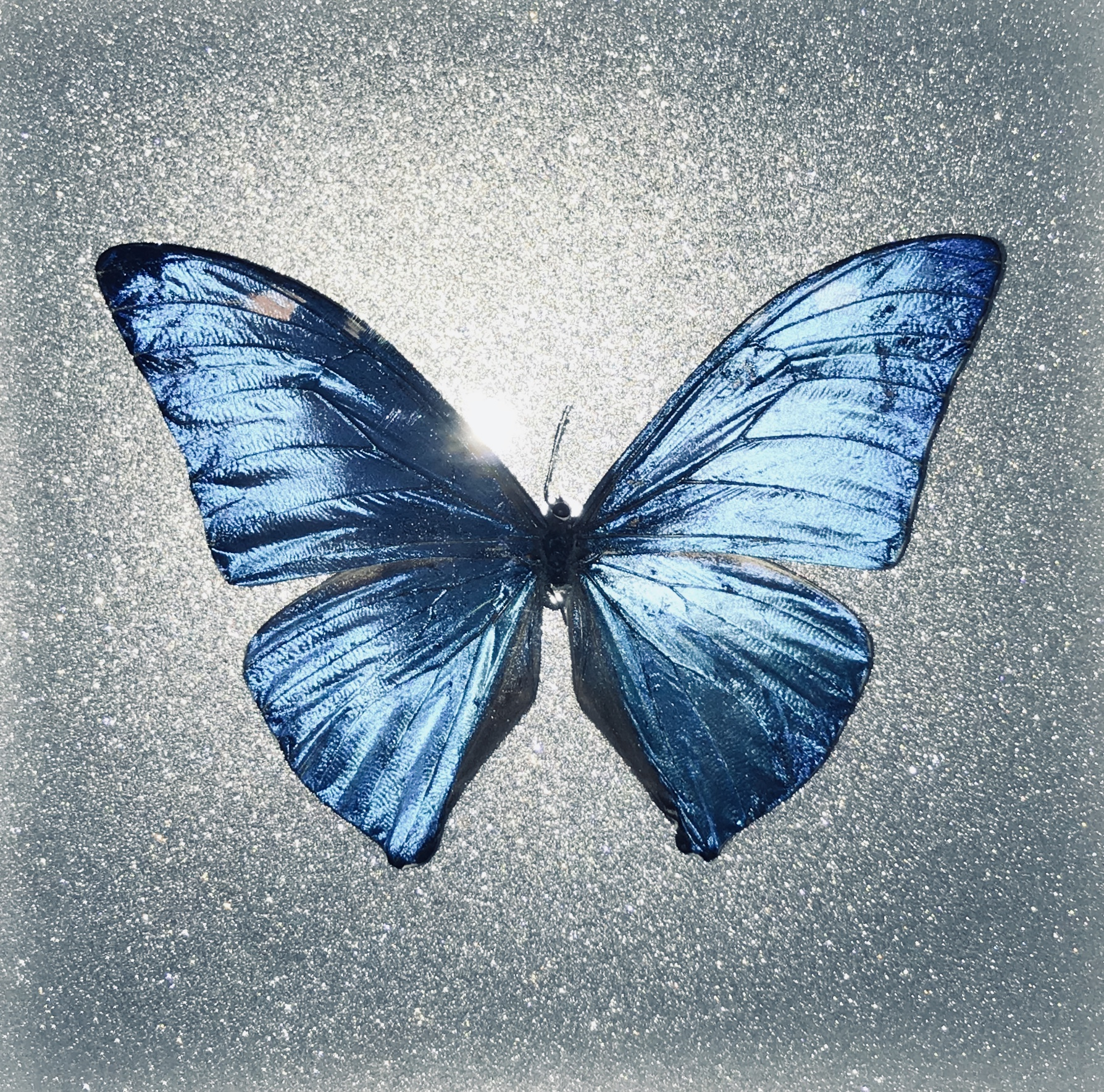 Blue Butterfly Designs