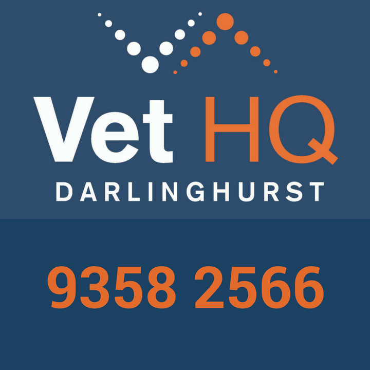 Vet HQ Darlinghurst