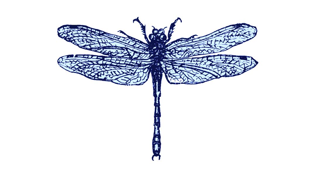 Blue Dragonfly Farm