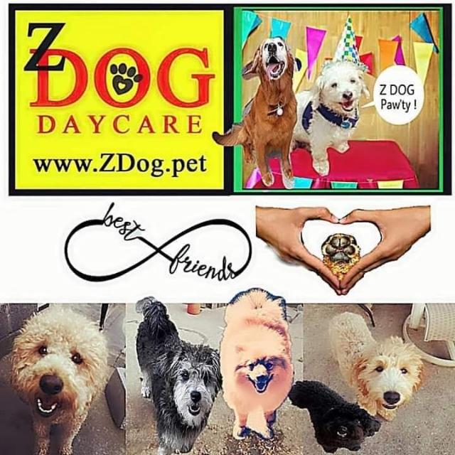 Z Dog Day Care