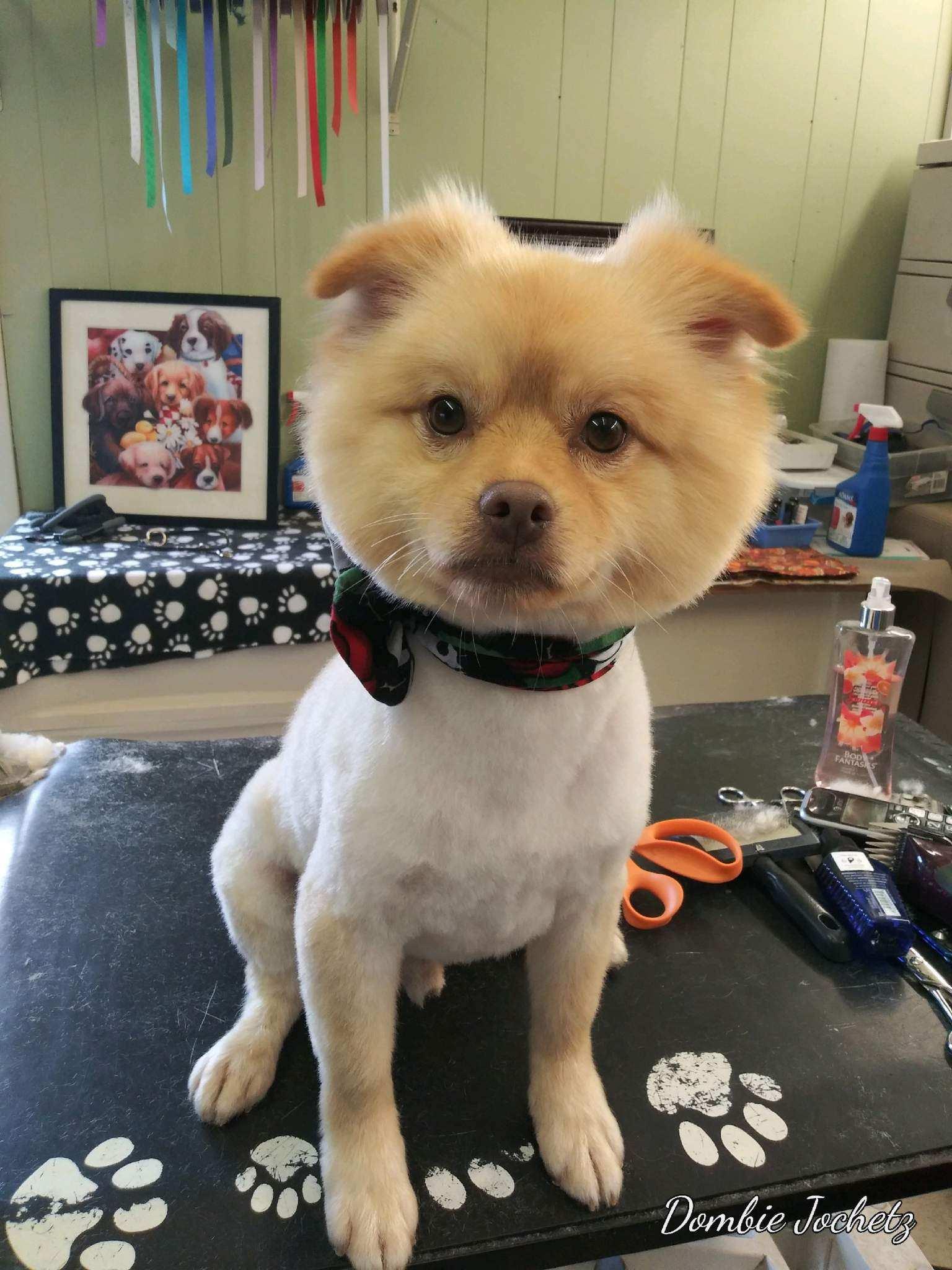 Animal House Dog Grooming