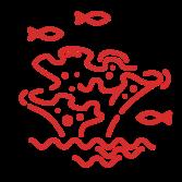 Coral Homewatch & Management
