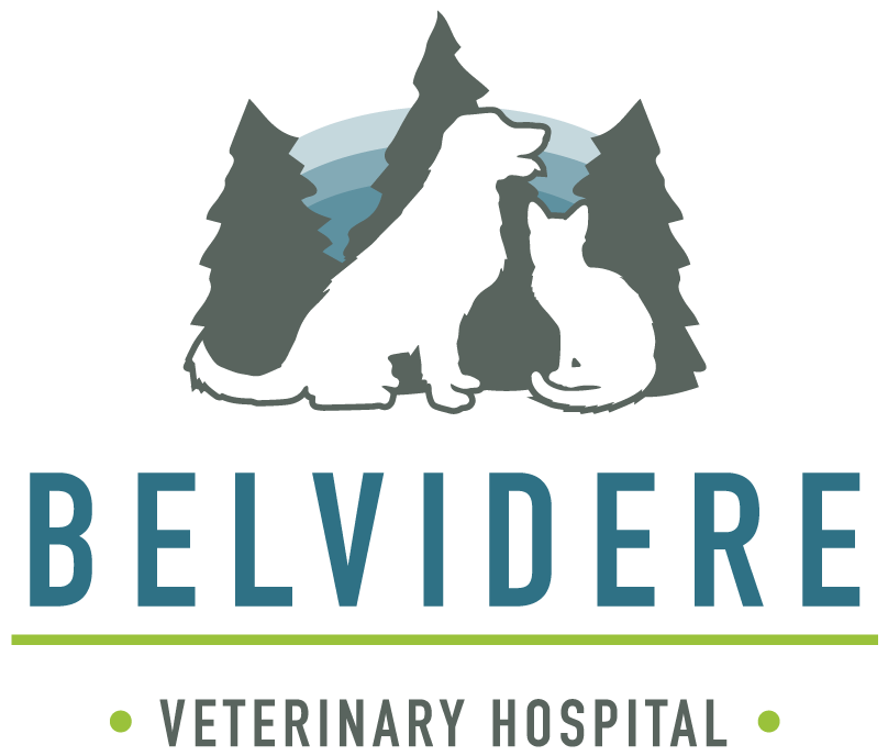 Belvidere Veterinary Hospital