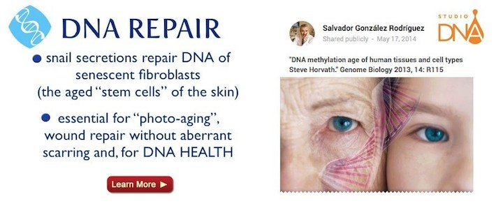 skin fibroblasts DNA repair of aging cells