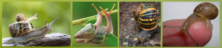 snail-secretions diversity