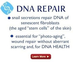 dna repair snail secretions