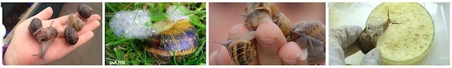 hands snails secretions All Natural Skin Care Products