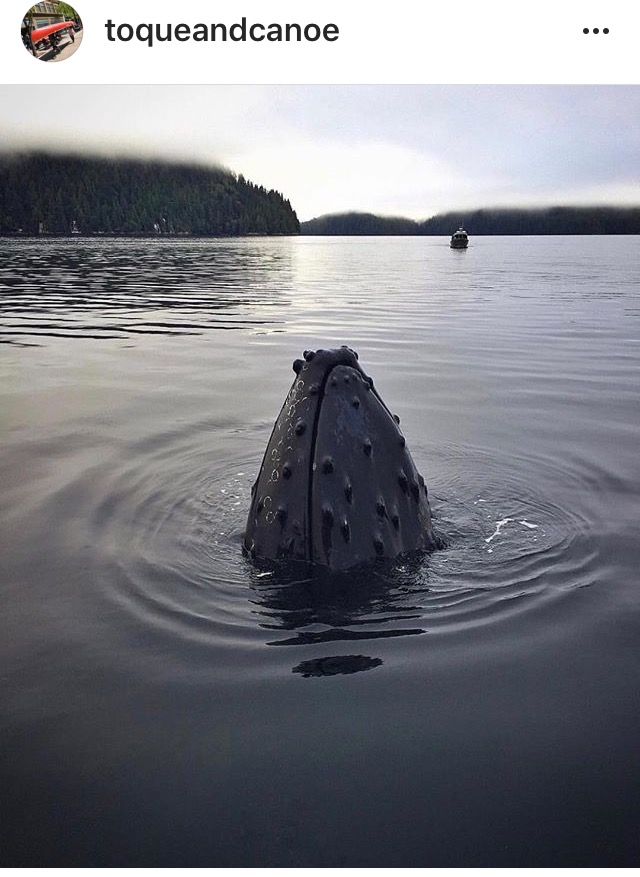 Toque and Canoe Instagram