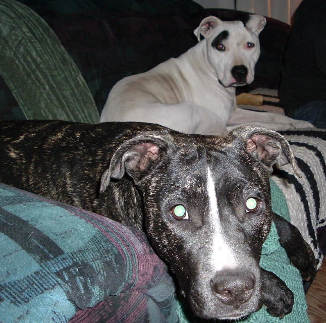 Victoria and Topsy from Canon City, Colorado