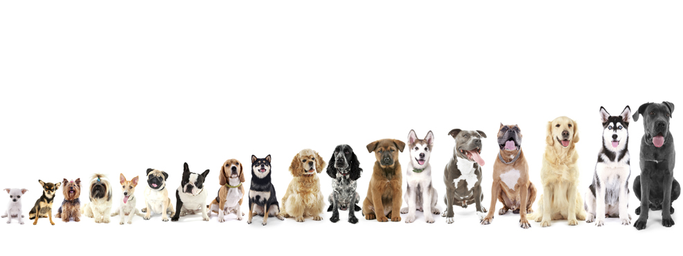 Assorted Dog Sizes from Small to Giant