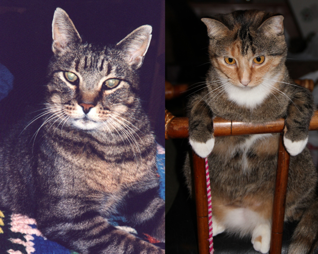 Dusty and Tica adopted from Fremont County Humane Society