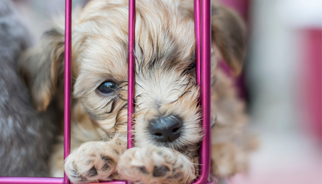 puppy to adopt in his cage