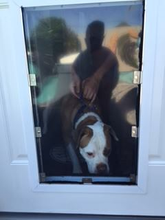 A Satisfied Customer Ready to Use His New Hale Pet Door