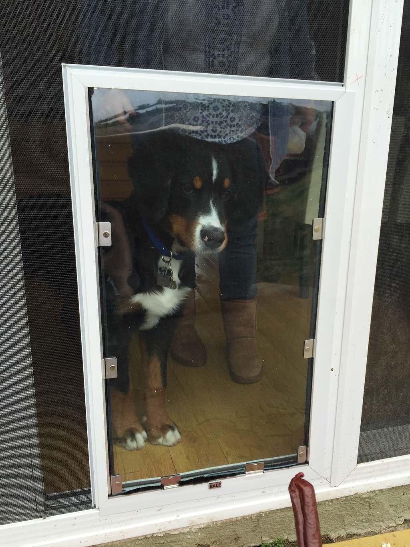 Hale Pet Door Screen Model ready for Action