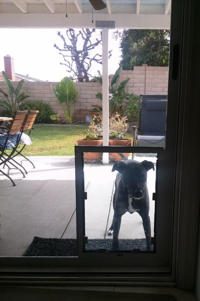 Hale Pet Door Screen Model with It's New Owner